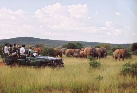 Makanyane Safari Lodge - Safari - Courtesy of Makanyane Lodge
